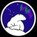 Aurora Bear